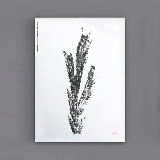 41-cards-flat-seaweed-m